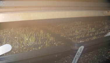 Our New Germination Chamber in Action!